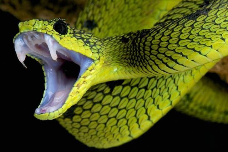 Сонник человек змея. к чему снится человек змея видеть во сне - сонник дома солнца