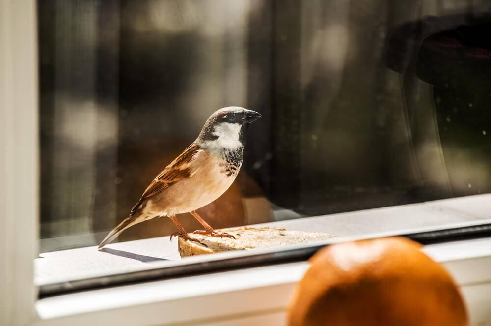 Примета «птица ударилась в окно и улетела»