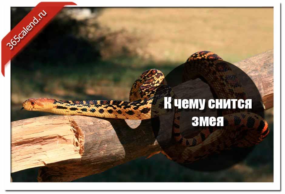 Сонник убиваю много змей. к чему снится убиваю много змей видеть во сне - сонник дома солнца