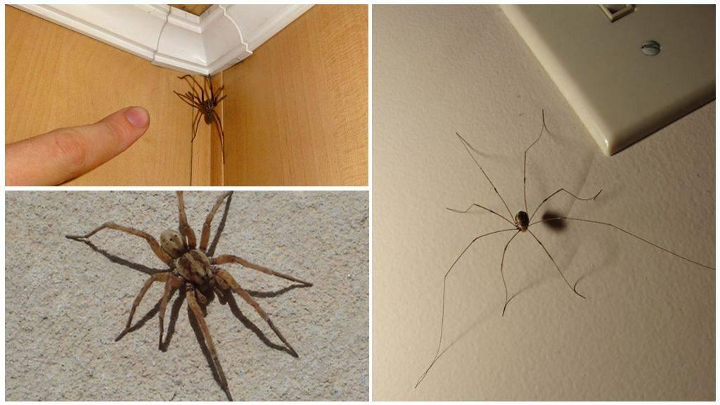 Сонник много пауков. к чему снится много пауков видеть во сне - сонник дома солнца