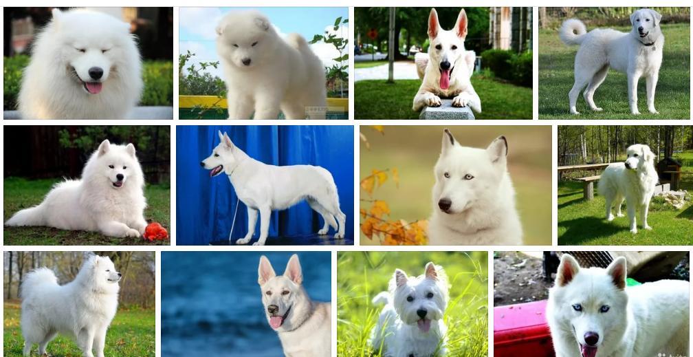 Сонник собака большая белая. к чему снится собака большая белая видеть во сне - сонник дома солнца
