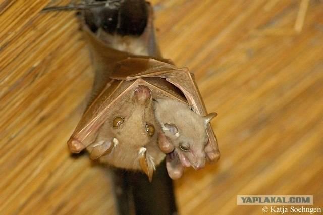 Если в дом залетела летучая мышь — приметы предков