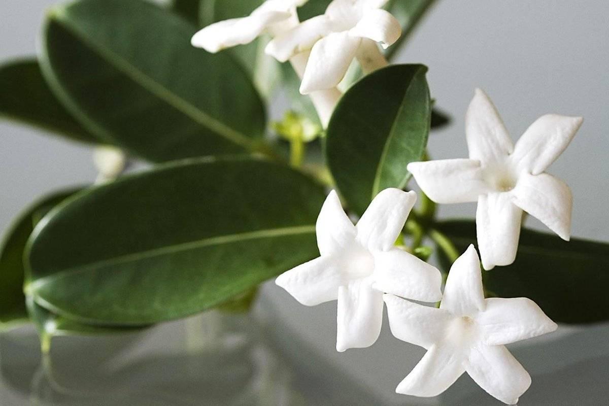 Хатиора — приметы заморского кактуса. можно ли держать дома? цветок и уход в домашних условиях