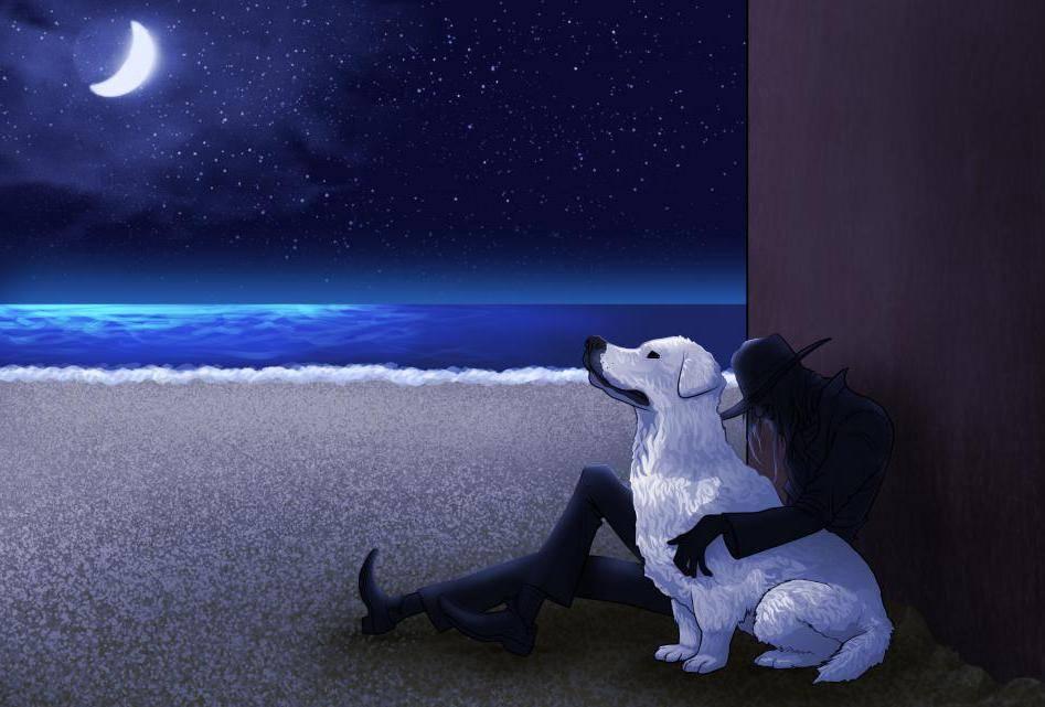 Сонник собака черно белая. к чему снится собака черно белая видеть во сне - сонник дома солнца