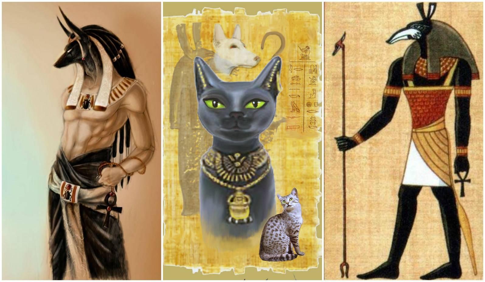 Магические способности кошек