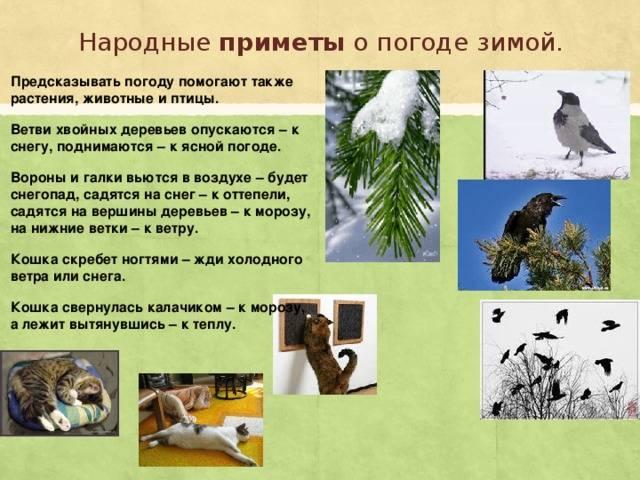 Приметы и суеверия о погоде связанные со сретением - tutmagiya