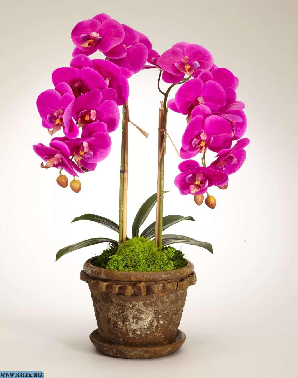 Почему нельзя держать дома орхидеи: народные приметы и суеверия