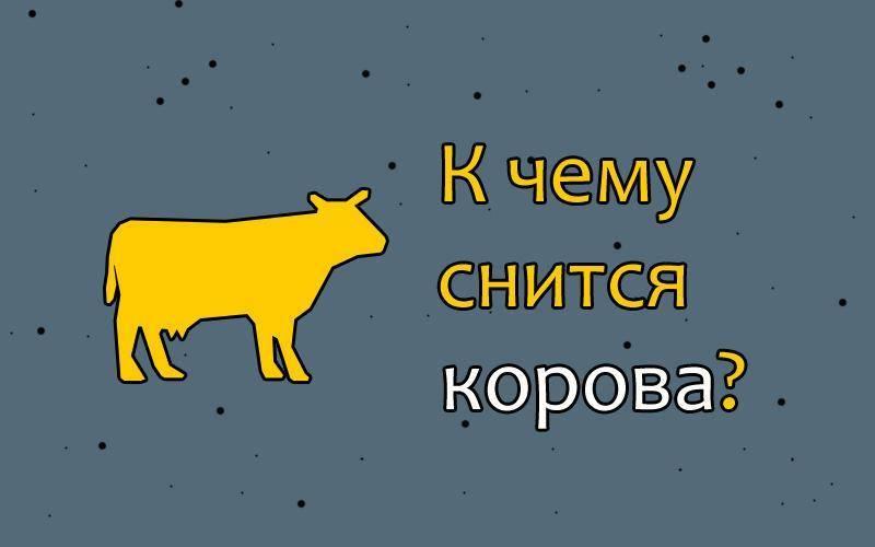 К чему снится корова во сне женщине: что это значит, белая, черная, рыжая, нападает, с теленком