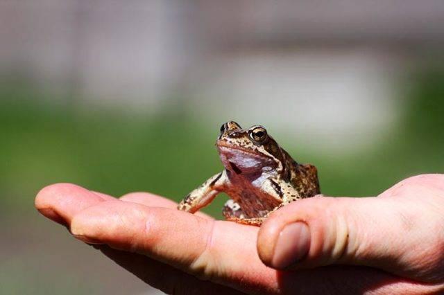 Мертвая лягушка у дома. толкование приметы о лягушках: что если запрыгнула в дом, встретил на дороге