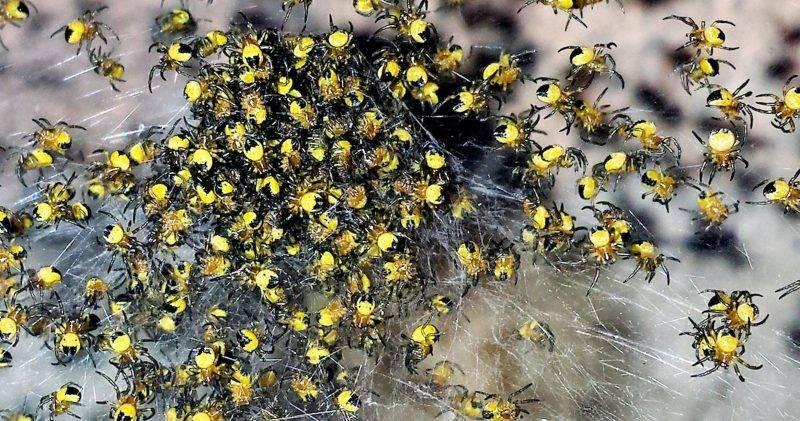 Сонник пауков много. к чему снится пауков много видеть во сне - сонник дома солнца