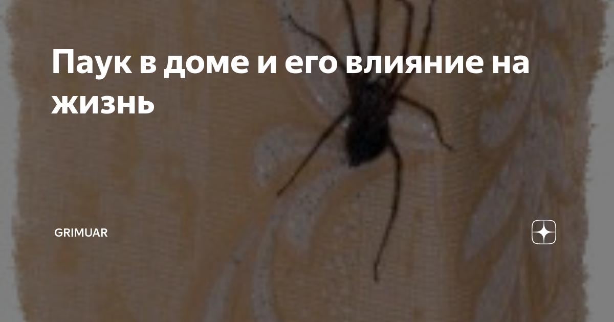 Приметы, если паук ползет по человеку