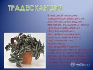 Пальма в доме - хорошо или плохо: приметы и суеверия, можно ли держать в квартире финиковую пальму