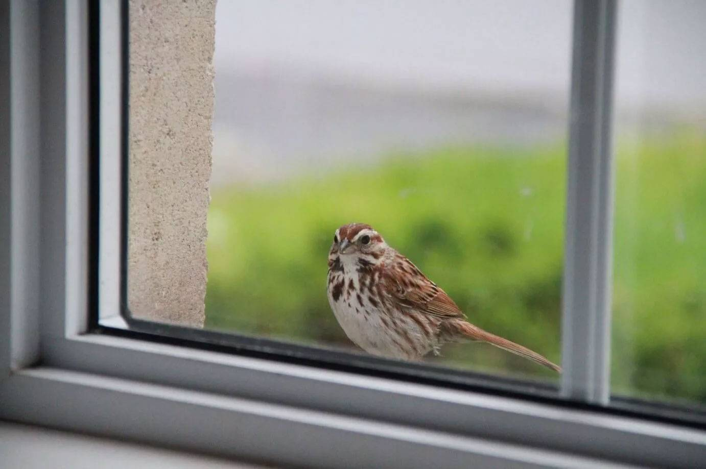 Что означает, если птица ударилась в окно: народные приметы
