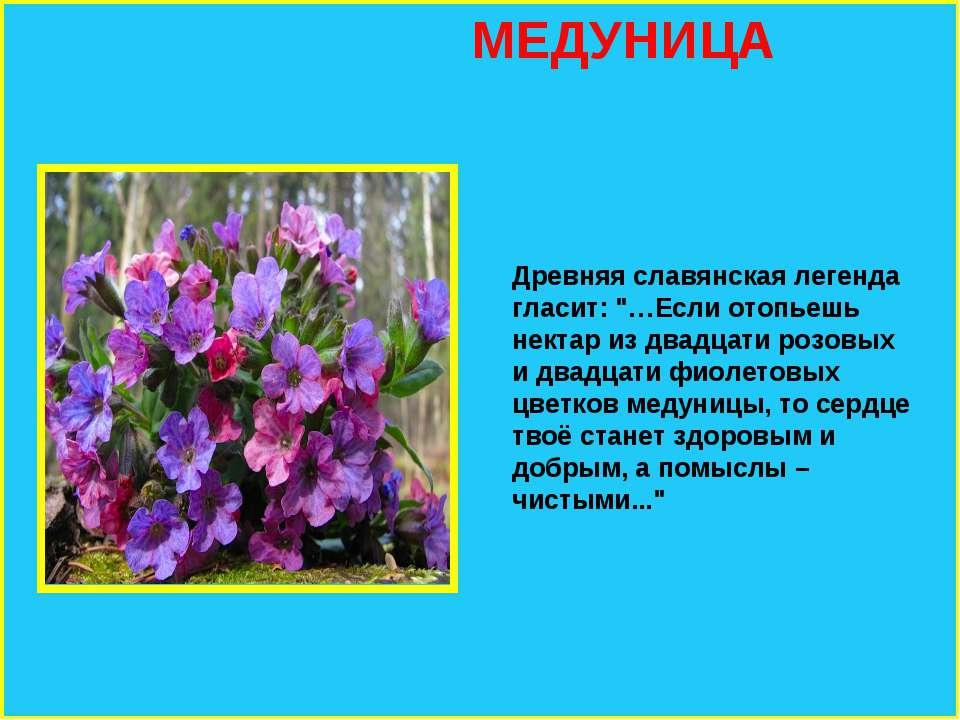 Старинные поверья о цветах — символах весны. диковинные легенды и поверья о весенних цветах рассказы про весенние цветы