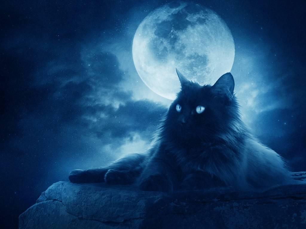Мистика кошек — след в истории и энергетика (11 фото) — нло мир интернет — журнал об нло