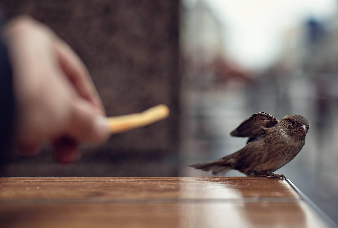 Птица залетела в дом через окно или балкон: примета