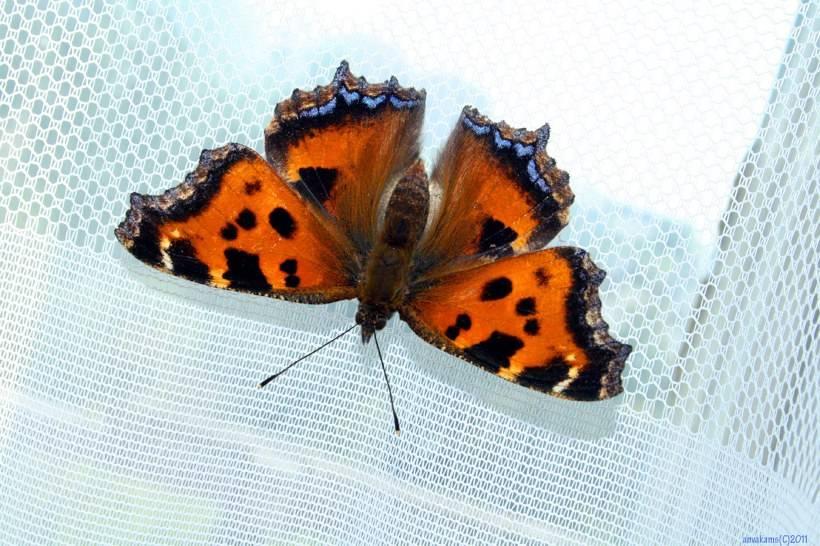 Узнайте, к чему бабочка залетела в квартиру и как трактуется данная примета