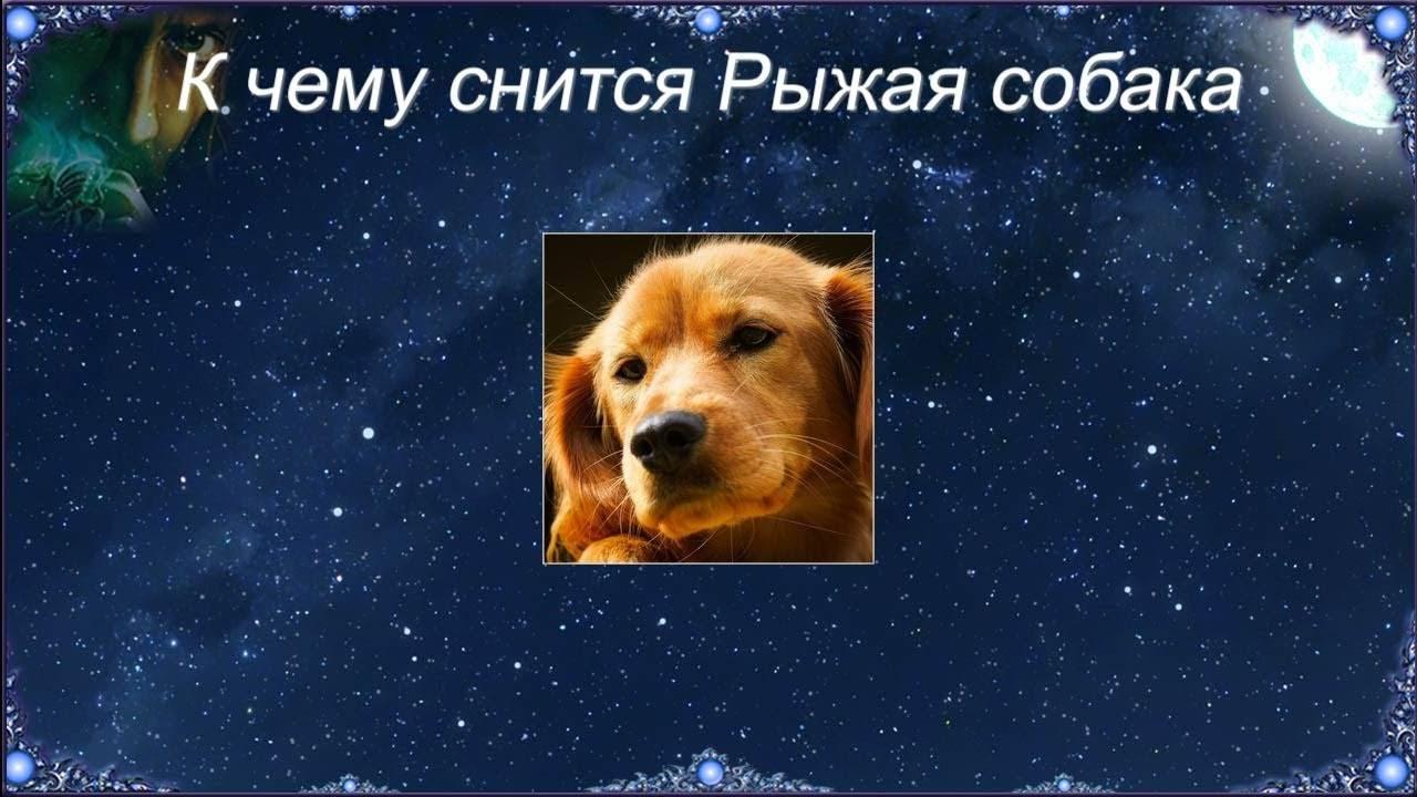 Сонник укусила собака до крови. к чему снится укусила собака до крови видеть во сне - сонник дома солнца