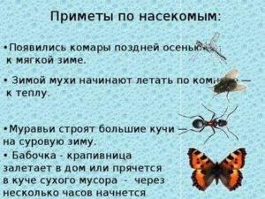 В квартиру залетела бабочка - примета хорошая или плохая?