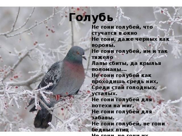 Примета голубь залетел в окно, квартиру, к чему