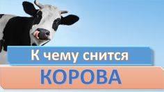К чему снится корова женщине?. толкование снов про корову. в статье рассказывается о значениях снов, в которых присутствует корова.