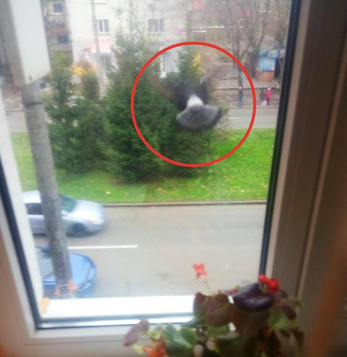 Приметы: синица ударилась в окно и улетела, врезалась, стукнулась и разбилась