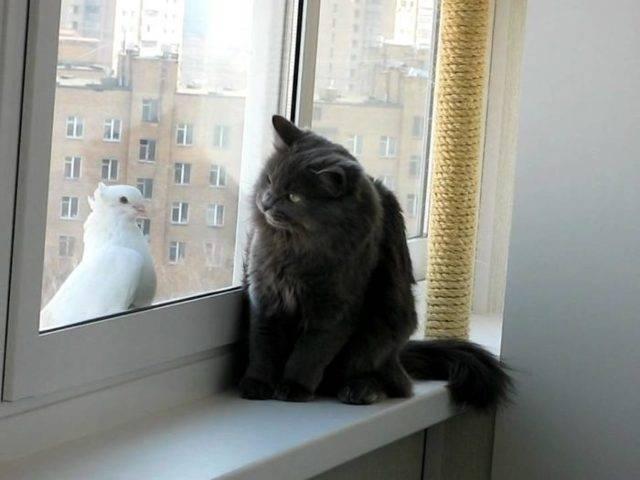 Почему по приметам голубь прилетает к окну