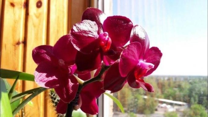 Орхидея дома: приметы и суеверия