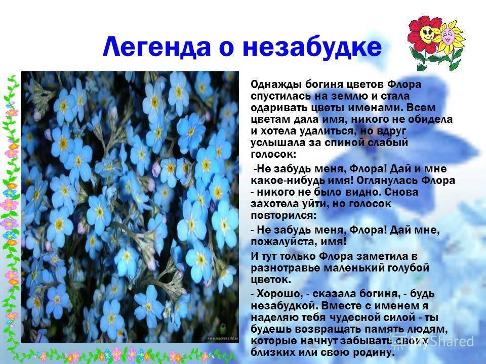 Диковинные легенды и поверья о весенних цветах