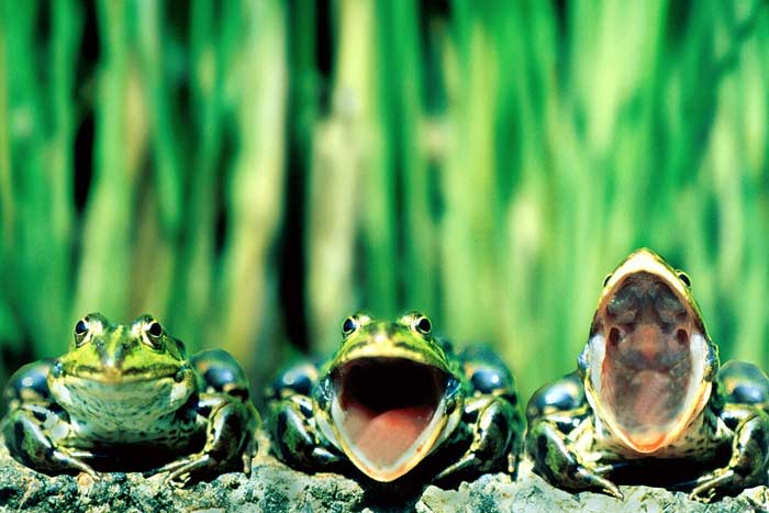 К чему найти земляную лягушку. толкование приметы о лягушках: что если запрыгнула в дом, встретил на дороге