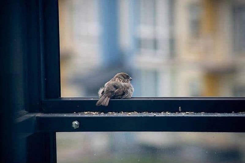 Птица ударилась в окно: что означает примета? птица ударилась в окно - к чему это? :: syl.ru