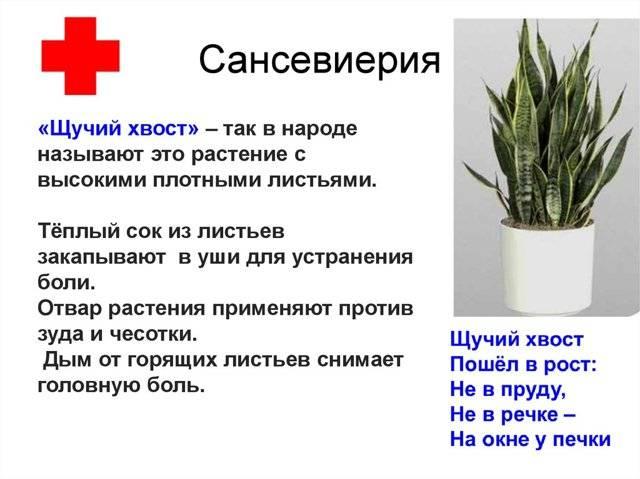 Приметы о кактусе в доме. миф или реальность?