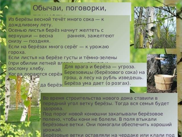 Падение деревьев примета что значит. деревья, народная примета - деревья, народное суеверие «деревья