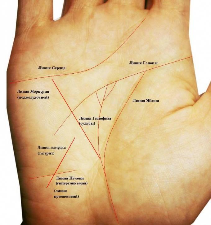 Линия здоровья на руке и её значение