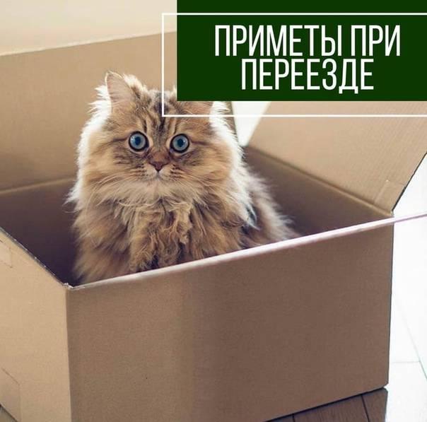 Какие существуют приметы про новоселье: в новую квартиру или дом
