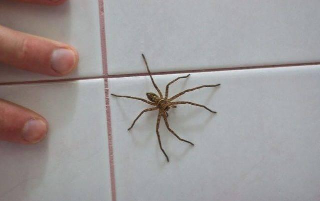 Примета – паук ползет по человеку: расшифровка значений