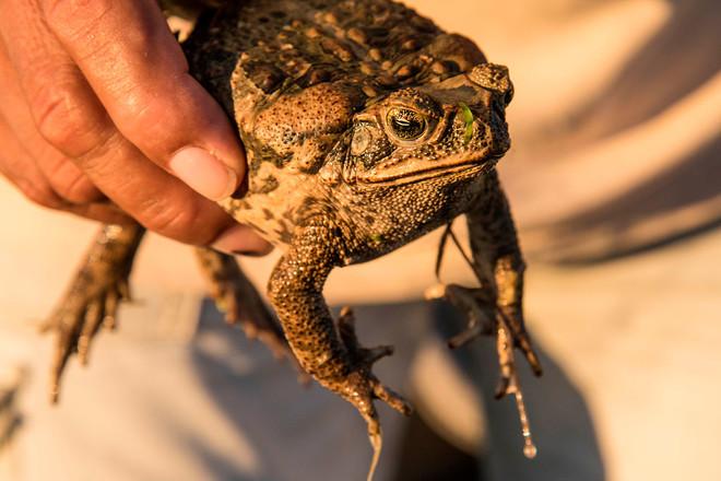 Лягушка или жаба в доме: приметы