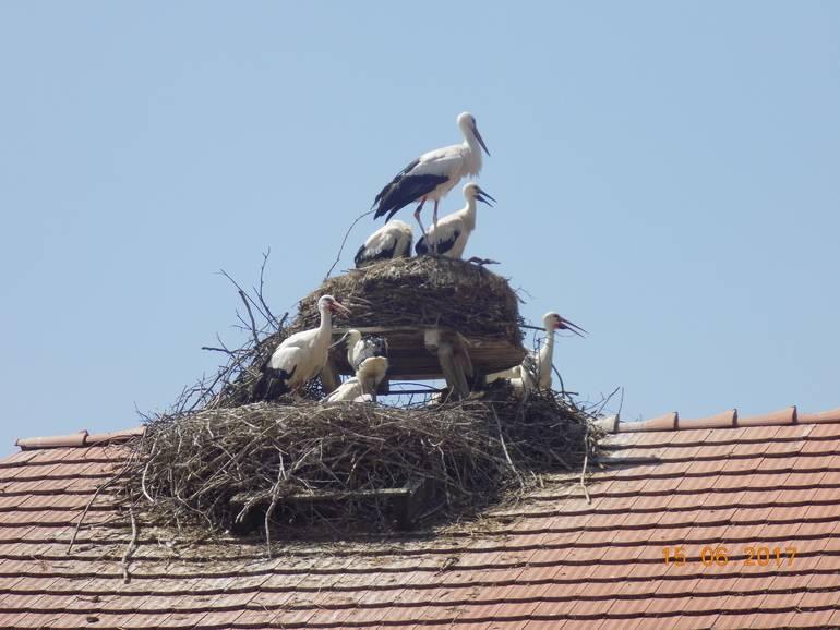 Увидеть аиста: примета хорошая или плохая, что значит, если он сел на крышу