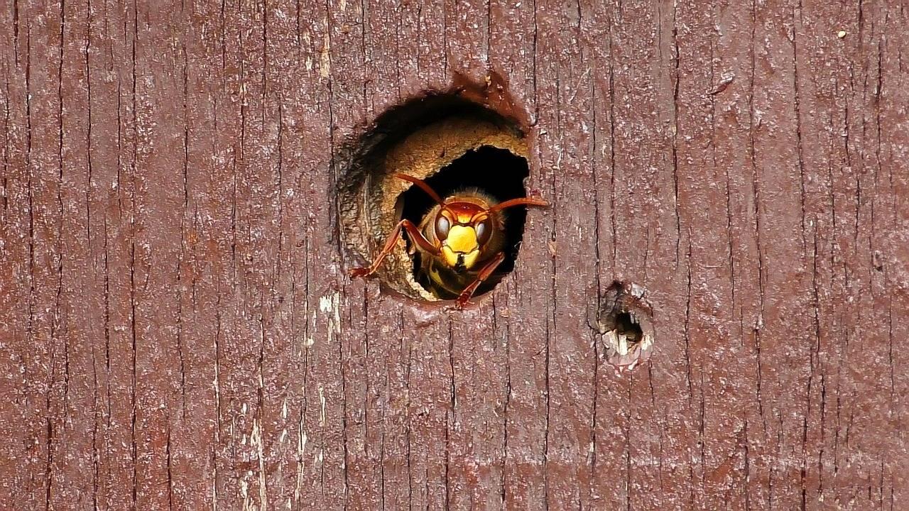 Шмель, пчела или оса залетели в дом: что сулят приметы – дачные дела