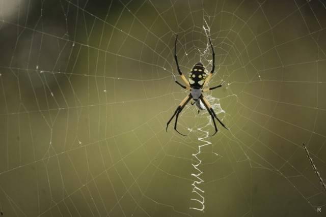 Паук спускается вниз по паутине: значение приметы