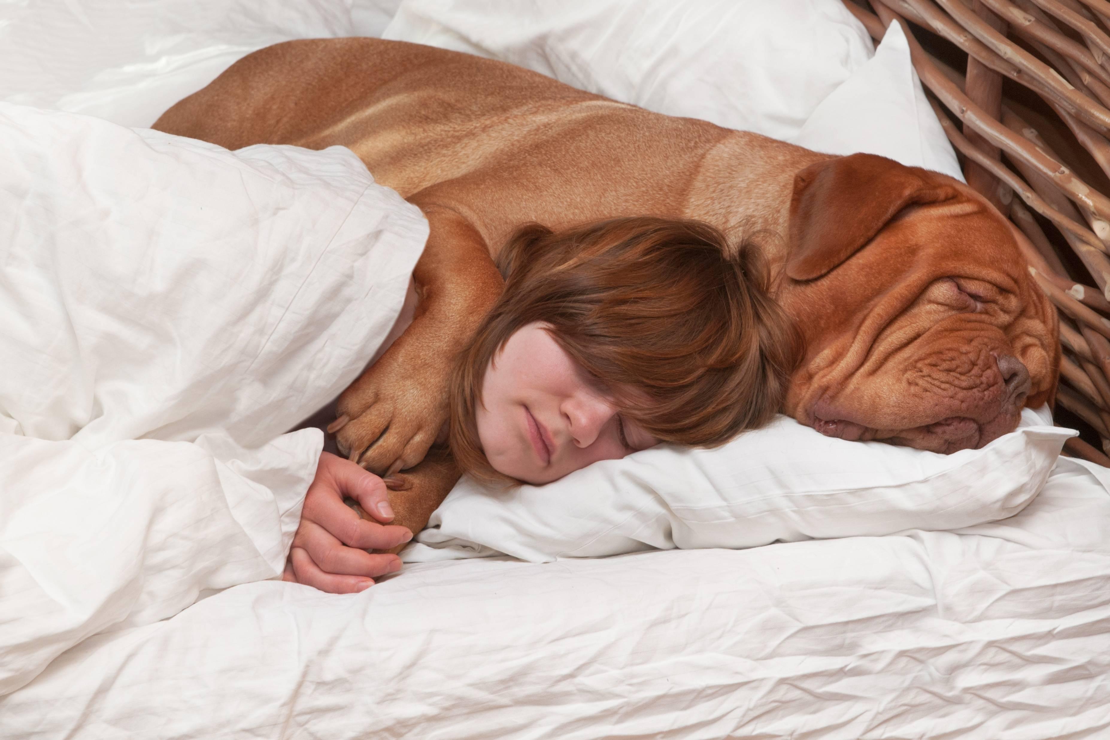 Сонник укусила собака лицо. к чему снится укусила собака лицо видеть во сне - сонник дома солнца