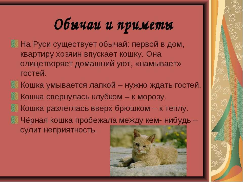 Белая кошка в доме: приметы и поверья, к чему перебежала дорогу