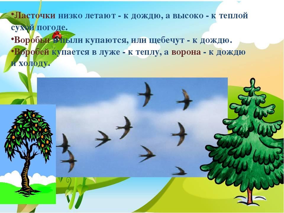 О чм говорит примета ласточки летают низко