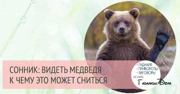 К чему снится медведь. видеть во сне медведь - сонник дома солнца
