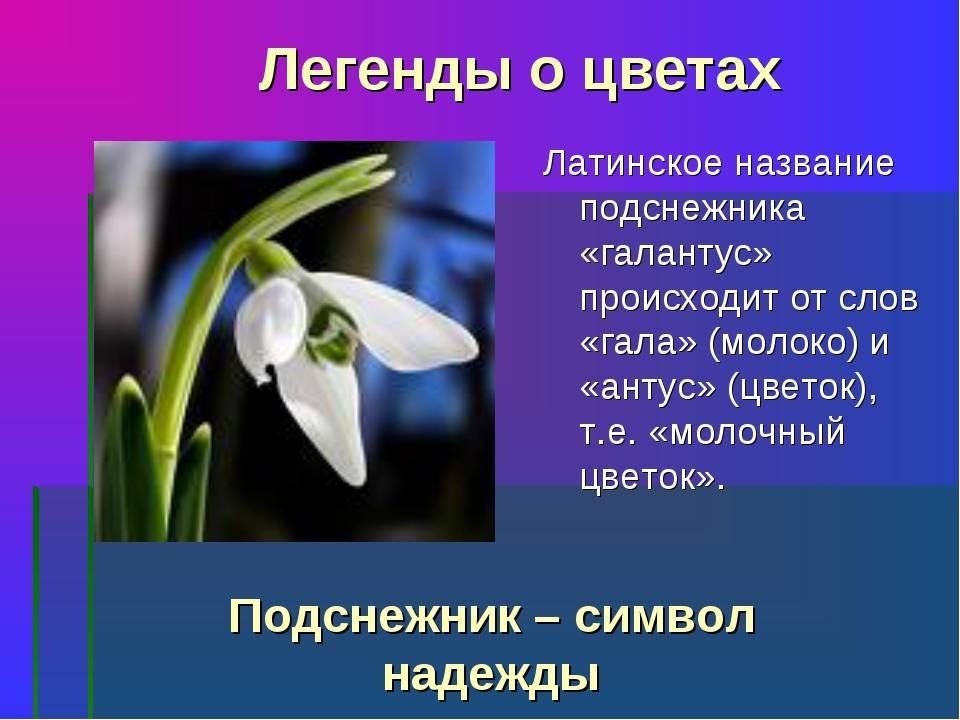 Старинные легенды и поверья весенних о цветах