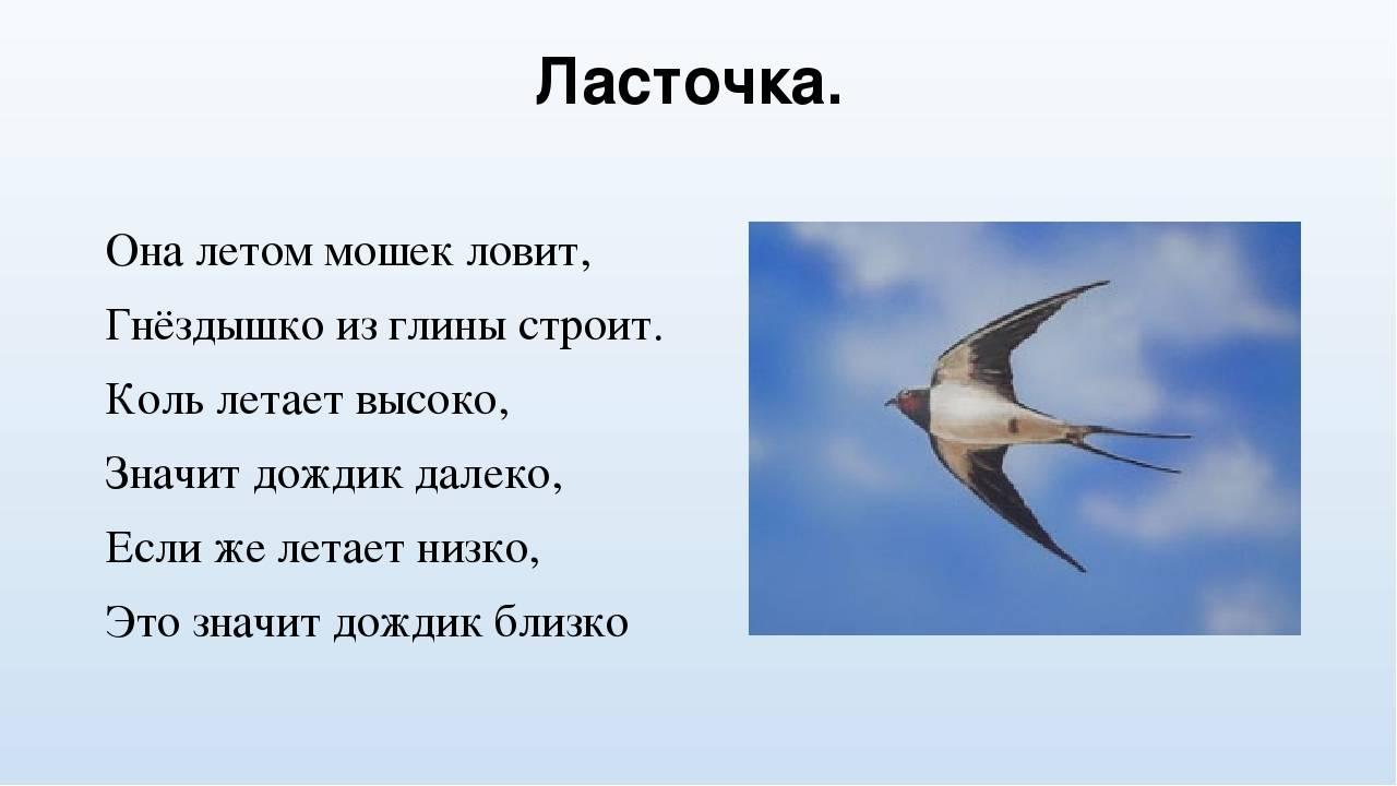 Если ласточки летают низко