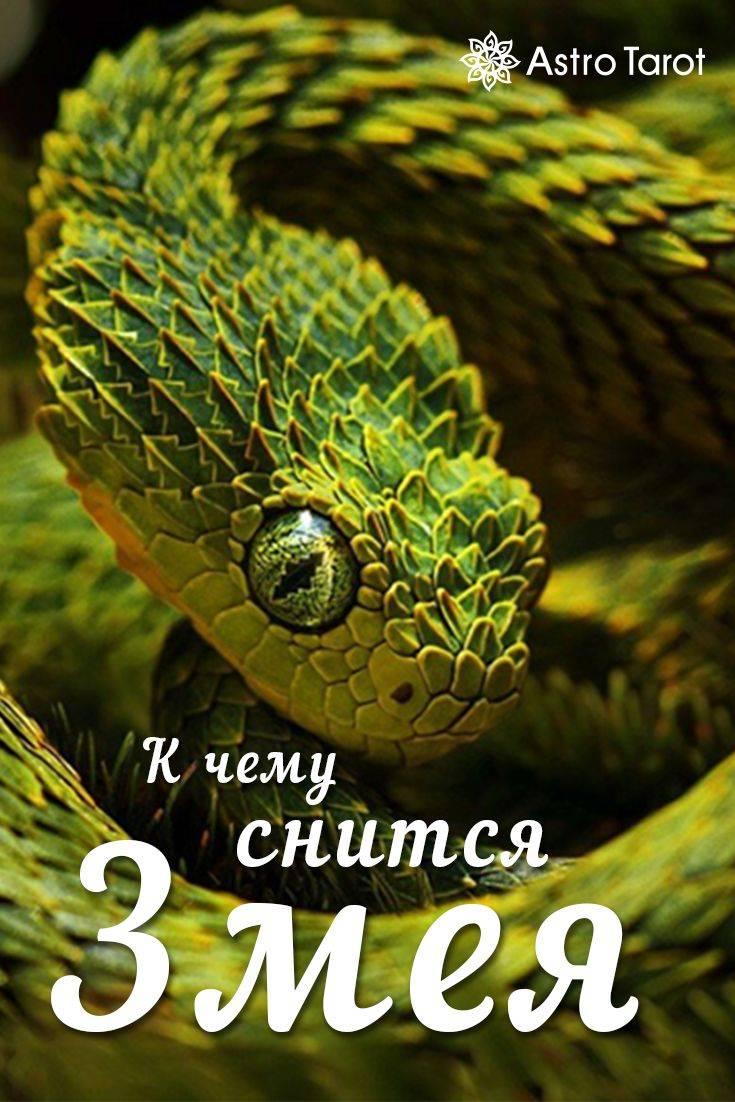 Убивать маленьких змей