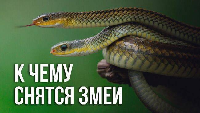 Змеи разные