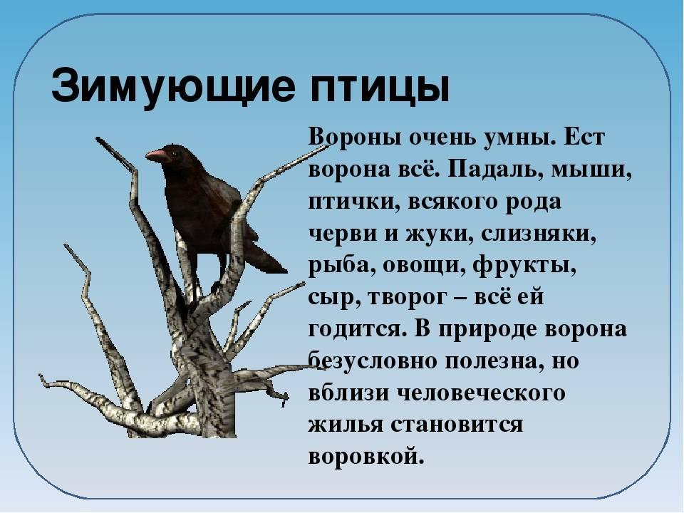 Мистические птицы вороны и связанные с ними приметы. примета: ворона (к чему каркает, стучит, села на окно)
