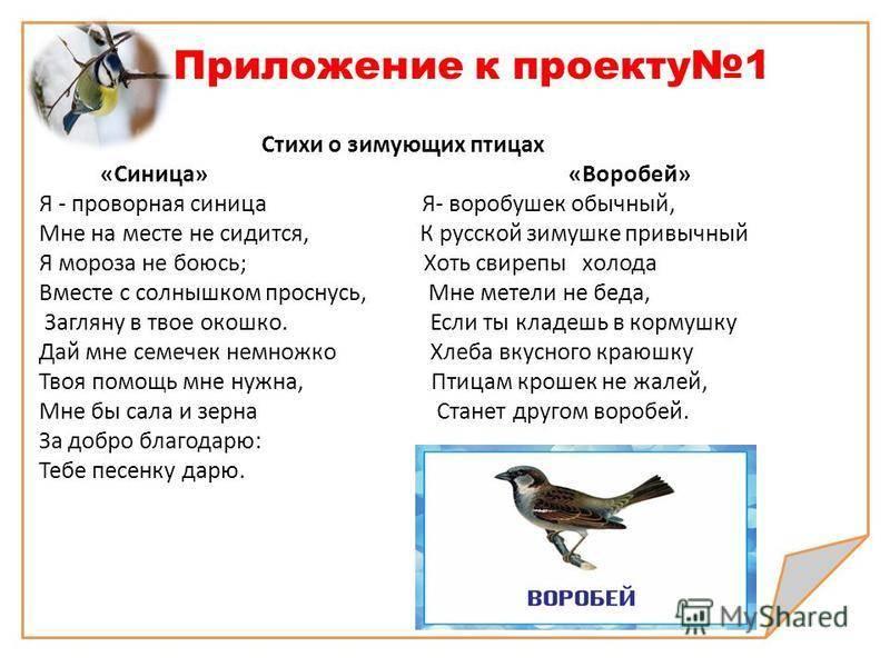 На даче нашли мертвую птицу приметы. приметы про птиц, суеверия о пернатых.